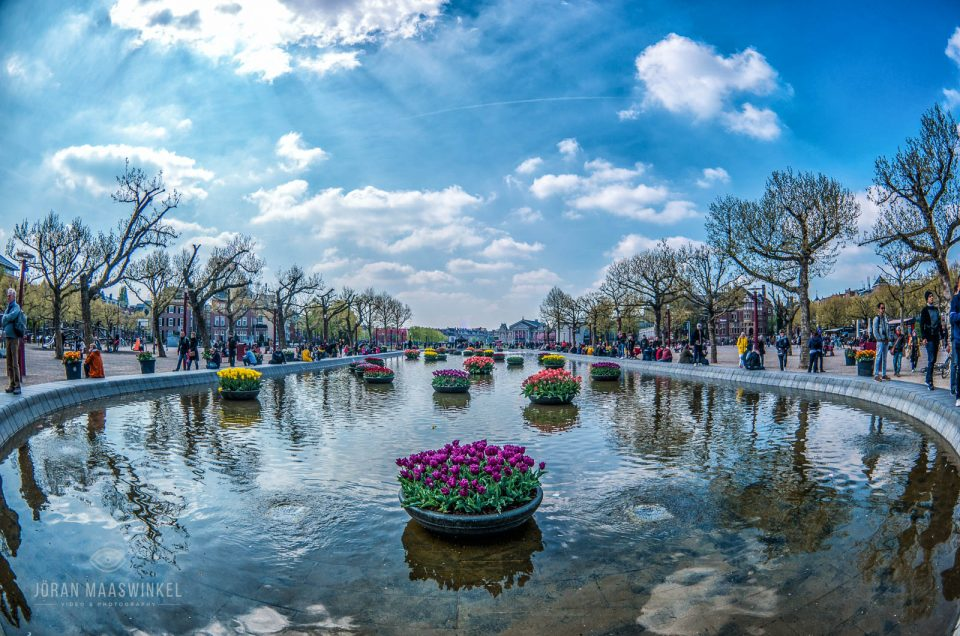 Tulips at the wading pool on Museumplein